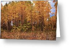 Awesome Aspens Greeting Card by Carol Cavalaris