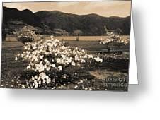 Azaleas By The Lake Greeting Card by Gaspar Avila