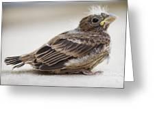 Baby Bird 1 Greeting Card by Jessica Velasco