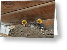Baby Birds  Picture Greeting Card by Preda Bianca