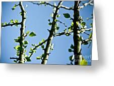 Baby Spring Tree Leaves 01 Greeting Card by Ryan Kelly