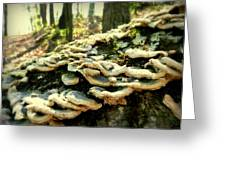 Backwoods Kentucky Fungi Greeting Card by Cindy Wright