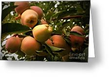 Backyard Garden Series - Apples Cluster Greeting Card by Carol Groenen