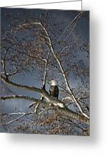 Bald Eagle In A Tree Greeting Card by Con Tanasiuk