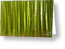Bamboo Abstract Greeting Card by Gaspar Avila