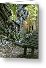 Banyan Tree And Park Bench Greeting Card by Dennis Clark