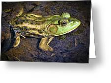 Barataria Swamp Frog Greeting Card by Ray Devlin