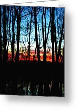 Bare Trees At Sunset 2 Greeting Card by Skip Nall