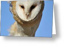 Barn Owl Up Close Greeting Card by Paulette Thomas
