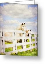 Barn Yard Dreamer Greeting Card by Darren Fisher