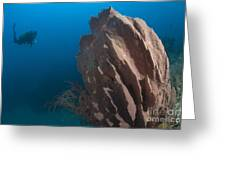 Barrel Sponge And Diver, Papua New Greeting Card by Steve Jones