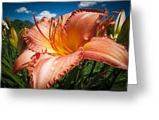 Basking In The Sunlight - Peach Colored Lily In A Flower Garden On A Hot Summer Day Greeting Card by Chantal PhotoPix