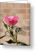 Be Magnificent Stand Out Greeting Card by Sandi Floyd