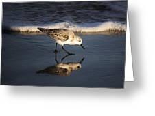 Beach Bird Greeting Card by Paulette Thomas