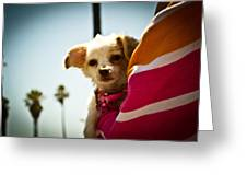 Beach Dog Greeting Card by Steven Baker