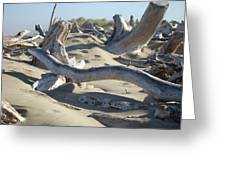 Beach Driftwood Art Prints Coastal Sand Dunes Shore Greeting Card by Baslee Troutman