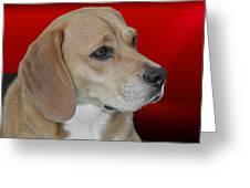 Beagle - A Hound's Hound Greeting Card by Christine Till