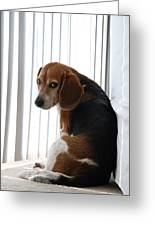 Beagle Attitude Greeting Card by Jennifer Lyon