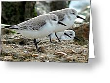 Beaks And Legs Greeting Card by Theresa Willingham