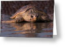 Beaufort The Turtle Greeting Card by Susan Cliett