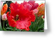 Beautiful From Inside And Out - Parrot Tulips In Philadelphia Greeting Card by Mother Nature