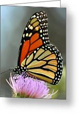 Beautiful Monarch Greeting Card by Marty Koch