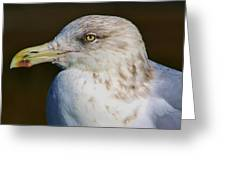 Beautiful Sea Gull Greeting Card by Paulette Thomas