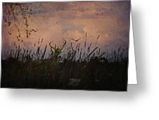Bedding Down For Evening Greeting Card by Lianne Schneider