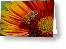Bee 12 Greeting Card by Mitch Shindelbower
