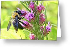 Bee At Work On A Sunny Day Greeting Card by Becky Lodes