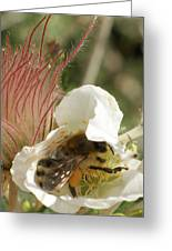 Bee Break Greeting Card by Ernie Echols