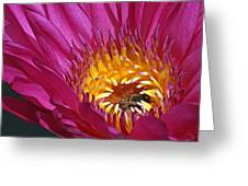 Bee Hiding In Pink Waterlily Greeting Card by Becky Lodes