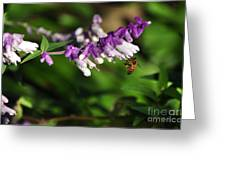 Bee on Flower Greeting Card by Kaye Menner