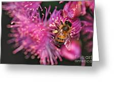 Bee On Lollypop Blossom Greeting Card by Kaye Menner