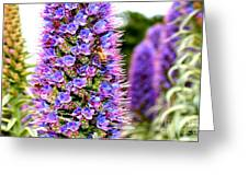 Bee On Purple Pride Of Madeira Flowers . 7d14835 Greeting Card by Wingsdomain Art and Photography