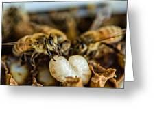 Bees Tending Larva Greeting Card by James Bull