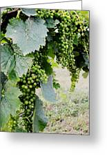 Before The Harvest Greeting Card by La Dolce Vita