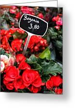 Begonia Greeting Card by Leslie Leda