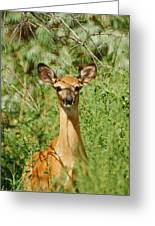 Being Watched Greeting Card by Ernie Echols