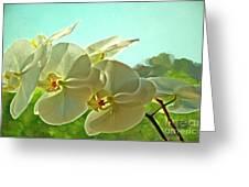 Belleza Blanca Greeting Card by Gwyn Newcombe