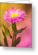 Little Flower Greeting Card by Angela Doelling AD DESIGN Photo and PhotoArt