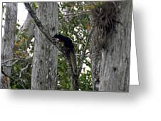 Big Cypress Fox Squirrel Greeting Card by David Lee Thompson