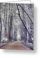 Big Sur State Park Greeting Card by Jane Linders