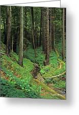 Big-sur-t8-3 Greeting Card by Craig Lovell