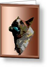 Binky Greeting Card by One Rude Dawg Orcutt