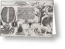 Biological Illustrations, 17th Century Greeting Card by Middle Temple Library