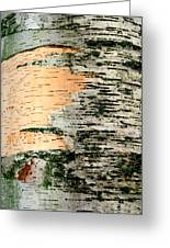 Birch Bark Greeting Card by Kathy Peltomaa Lewis