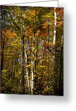 Birch Trail Greeting Card by Jo-Anne Gazo-McKim