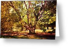 Birch Tree Greeting Card by Jai Johnson