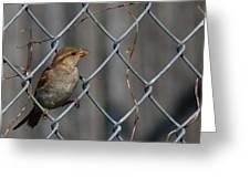 Bird In A Wire Greeting Card by Joe Wicks